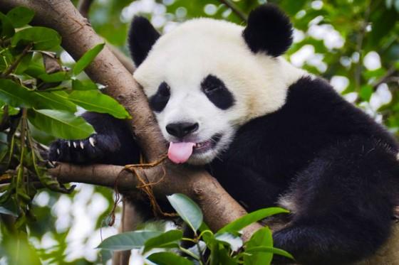 Google Panda 4.2, la mise à jour de l'algorithme